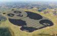 W Chinach powstała farma solarna w kształcie pandy